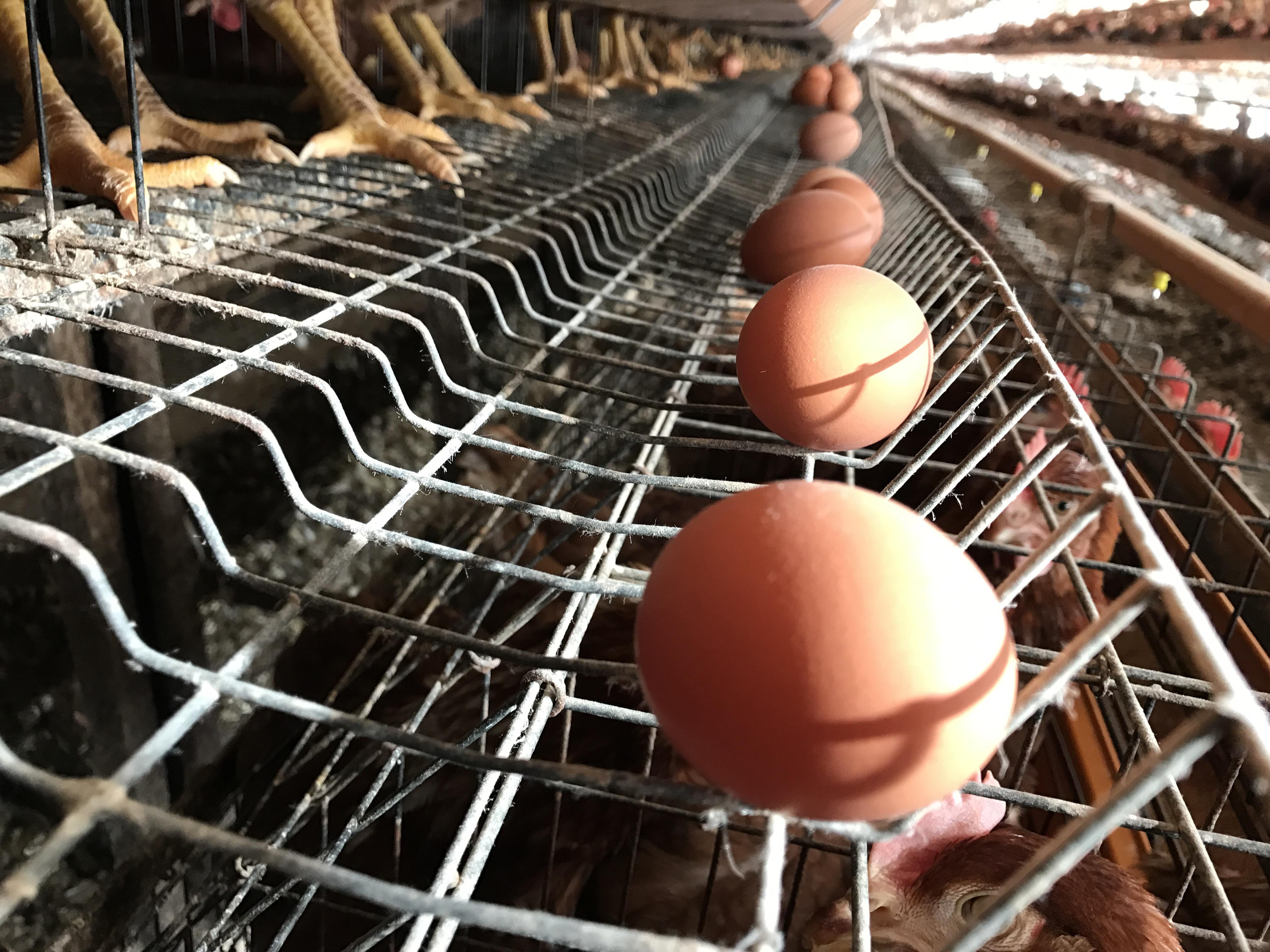 ズラリと並んだ卵