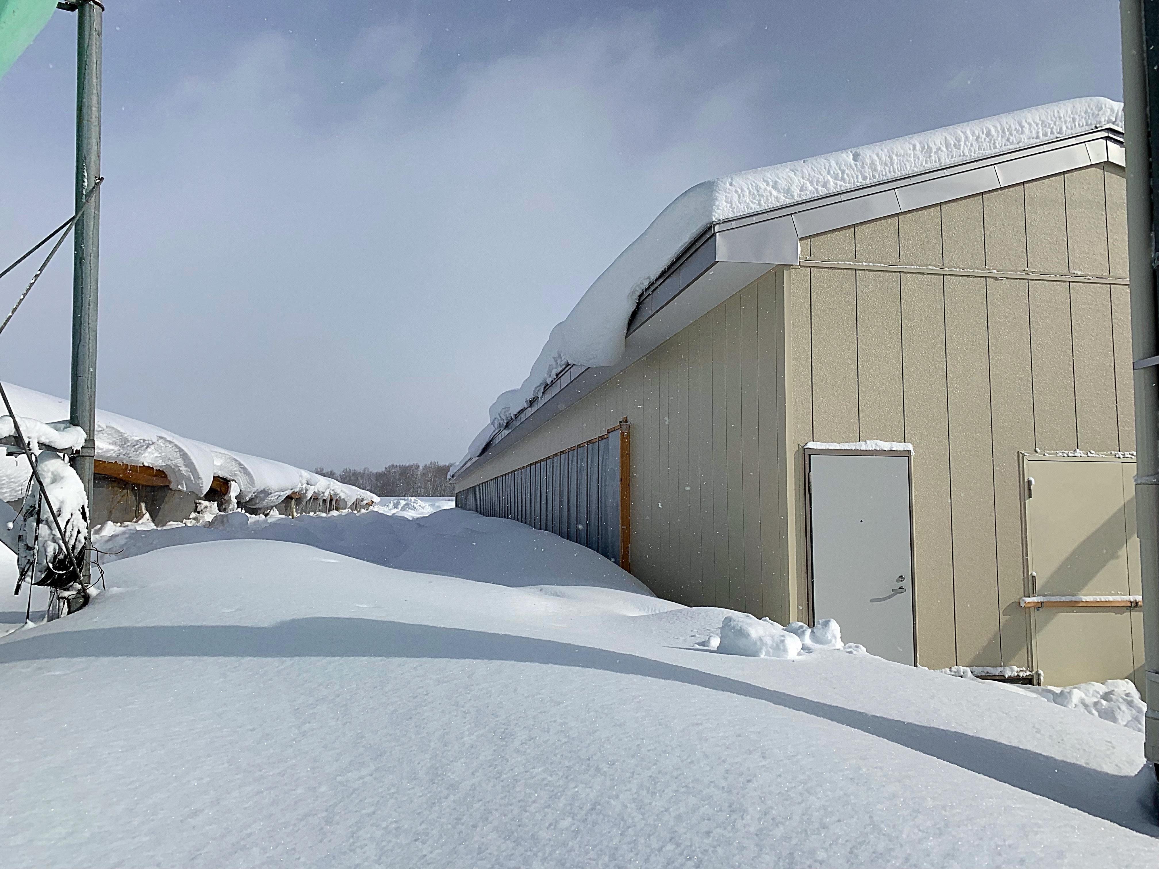 鶏舎横に一気に積もった雪